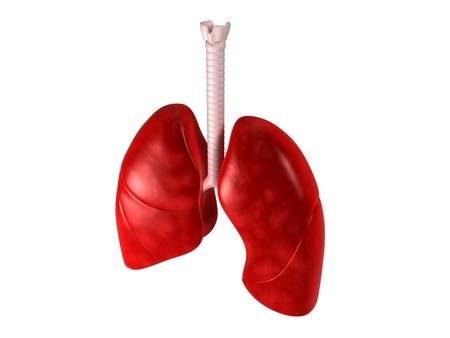 ciğer çeperi, ciğer çeperi engellenmesi