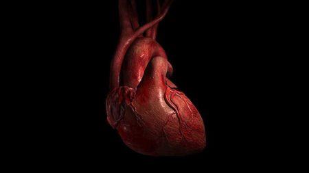 kadınlar ile erkeklerin kalpleri, kadın kalbi, erkek kalbi